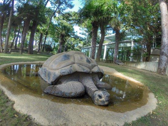 Zoo de la Palmyre: de très beau spécimen de tortue