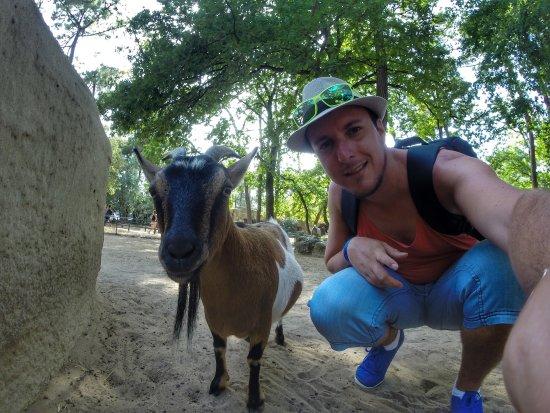 Zoo de la Palmyre: un accès dans une zone avec des animaux en liberté pour le bonheur des petits (et des grands)
