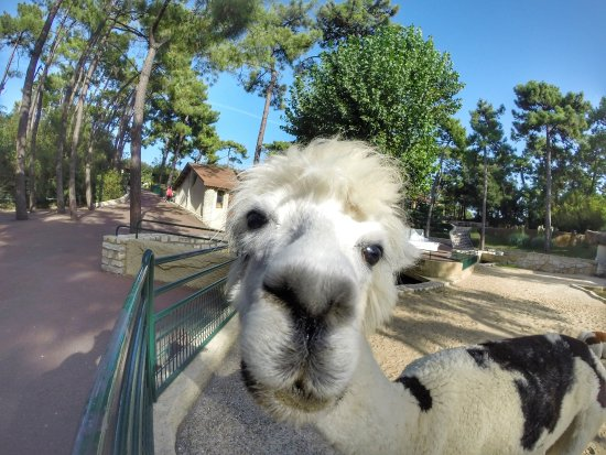 Zoo de la Palmyre: encore une fois une grande proximité avec les animaux