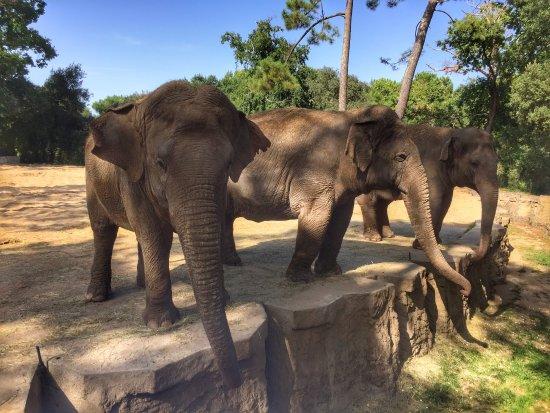 Zoo de la Palmyre: Très beaux éléphants avec une bonne proximité