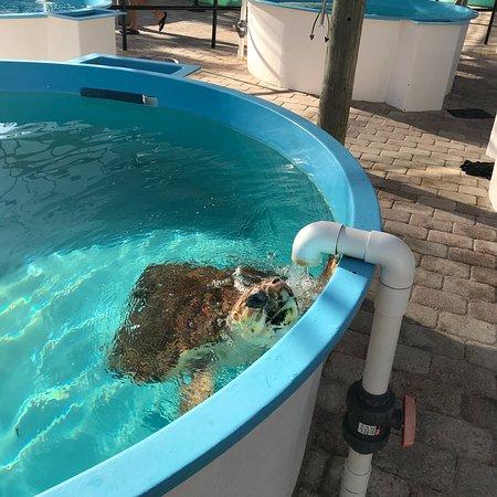 Juno Beach, Φλόριντα: photo1.jpg