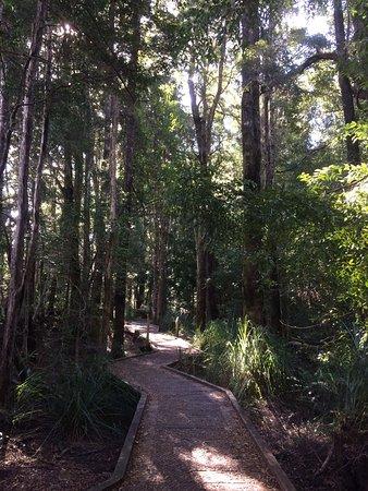 Huon Pine walk (20 min or less return)