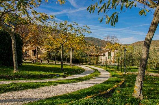Serra San Quirico Picture