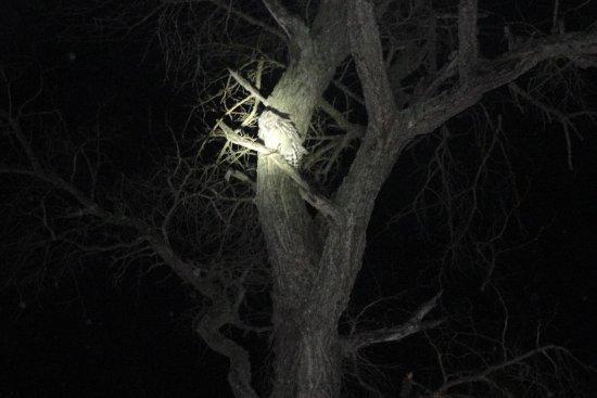 Burchell's Bush Lodge : Visitors at night