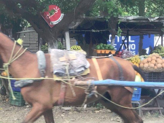 Tico Tours Guanacaste: Nicaragua: Horse-drawn cart