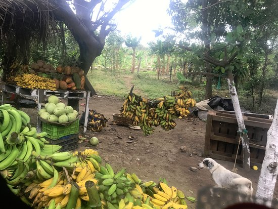 Tico Tours Guanacaste: Nicaragua: roadside fruit stand