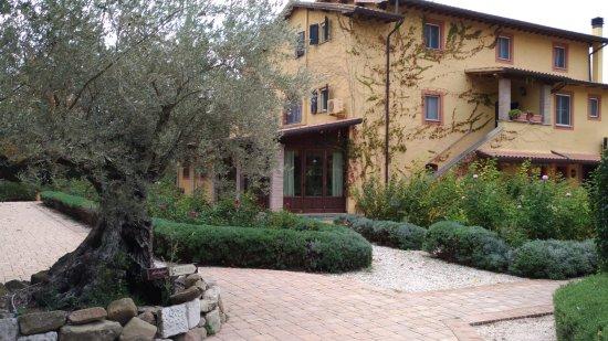 Tordandrea, Italia: L'ulivo di benvenuto