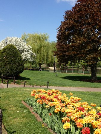 Boston Public Garden: Beautiful Spring