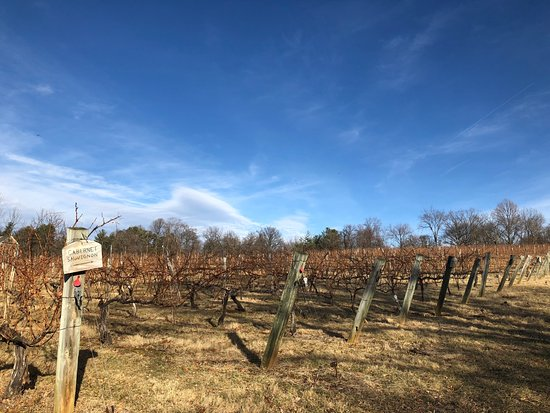 Willowcroft Farm Vineyards: The vines looks beautiful even during the winter!