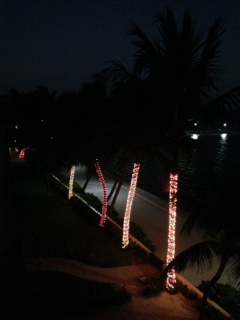 The Phoenix Resort: The palms were decorated with lights for Xmas.