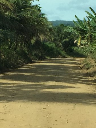 Stann Creek, Belize: The 4 mile dirt road to the park
