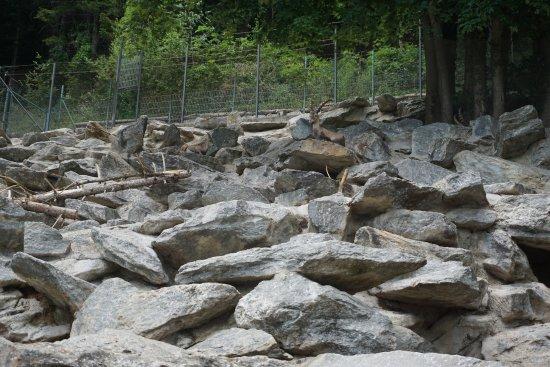 Alpenzoo: ibex