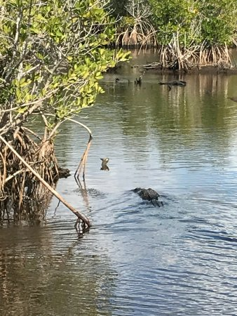 Airboat Tours Clearwater Fl