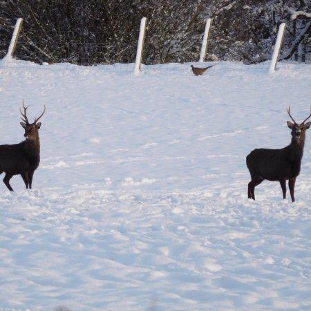 Wildside Highland Lodges: photo7.jpg