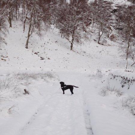 Wildside Highland Lodges: photo8.jpg