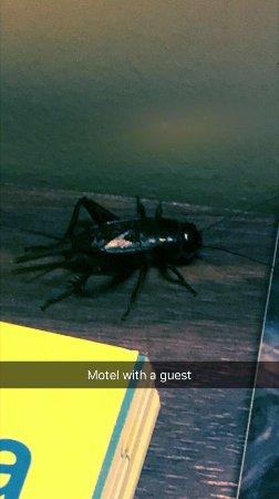 Australia Park Motel: photo1.jpg