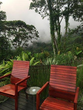 Serene Jungle Getaway