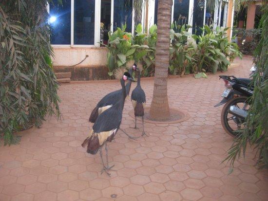 Koudougou, Burkina Faso: three beautiful pets