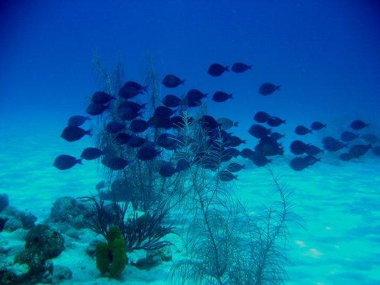 Aquanautas: peixes