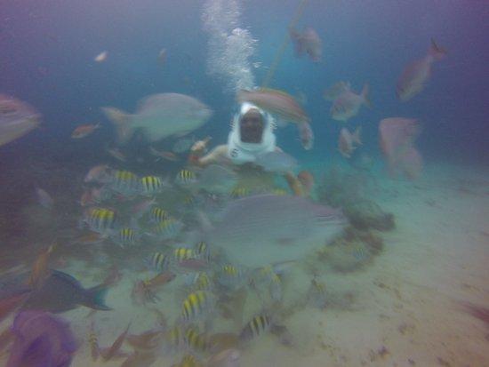 Aquanautas: cardume de peixes profundidade do mergulho 6 metros