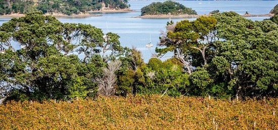 Остров Уаихеке, Новая Зеландия: View from Goldie vineyard
