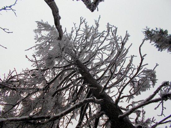 Twin Mountain, NH: MT WASHINGTON/ North Ridge Mountain Guides