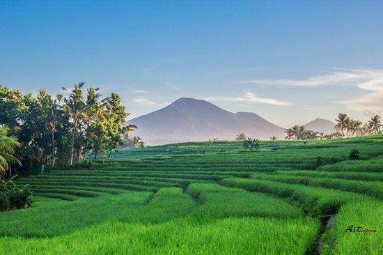 Bali Destiny Adventure