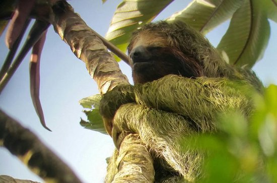 3-in-1 Arenal Combo Tour: Hanging...