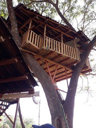 Playa San Miguel, Коста-Рика: Pizza Tree