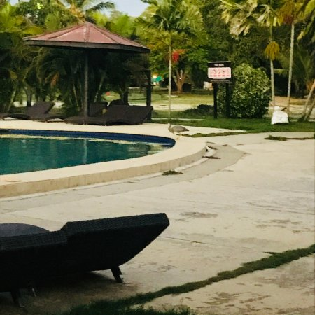 Plantation Island Resort Φωτογραφία