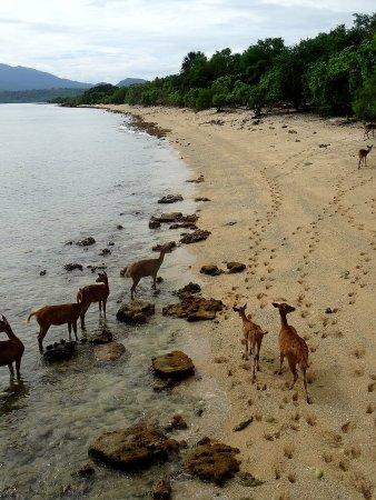 Taman Nasional Bali Barat, Indonesia: DSC03823_large.jpg