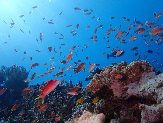 元気一杯泳ぎ回るカラフルな魚達! これぞ南国の海! – Bilde av Smile ...