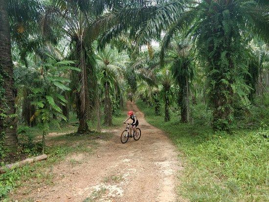 Ride Krabi: Up first then blast down.