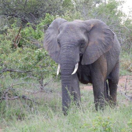 Ngala Private Game Reserve, Afrika Selatan: photo2.jpg