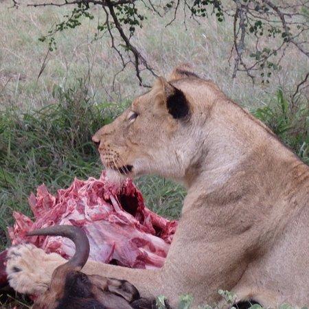Ngala Private Game Reserve, Afrika Selatan: photo3.jpg