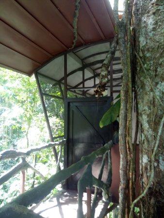 Boca Tapada, Costa Rica: Eingang zum Baumhaus, sehr toll eingerichtet, sogar eine Aussendusche ist vorhanden. Perfekt!