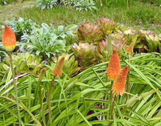 Verwilderter Garten Picture Of Quinta Do Boa Vista Funchal
