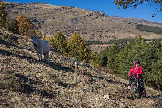 Berchules, Spanien: Out riding
