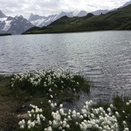 Bachalpsee Lake : photo0.jpg