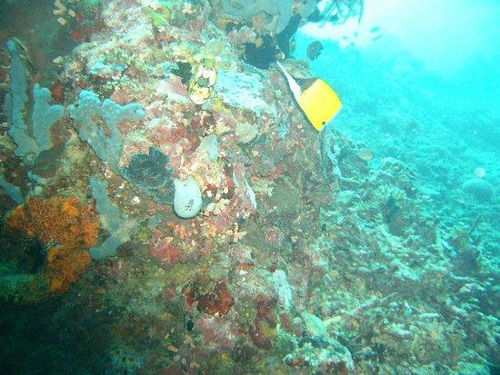 Two Fish Divers Bunaken: OI000054_large.jpg