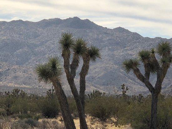 Twentynine Palms, Californien: photo3.jpg