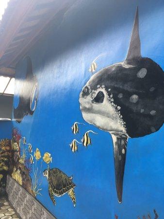 Mola-mola and mantas at the D&B Warung.