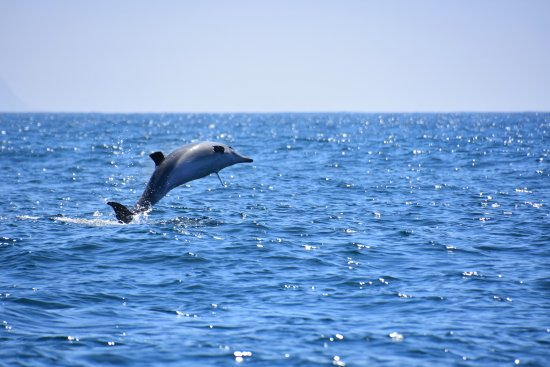 Bayview Hotel: Dolphins off Robberg