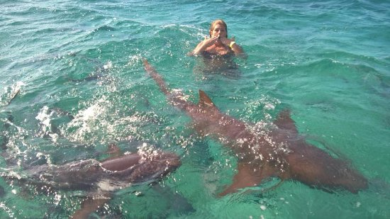 Swimming with the Nurse sharks....VERY friendly - Picture of New Day on