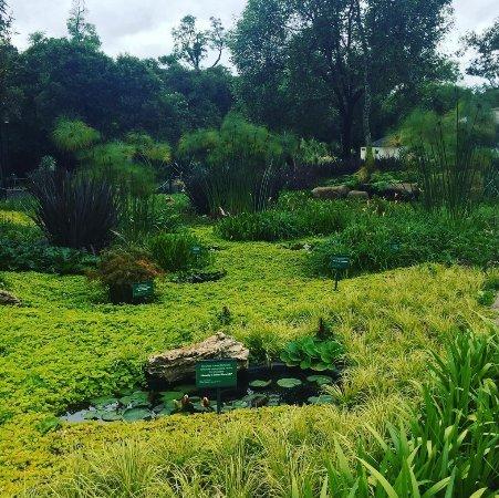Jardin Botanico del Bosque de Chapultepec