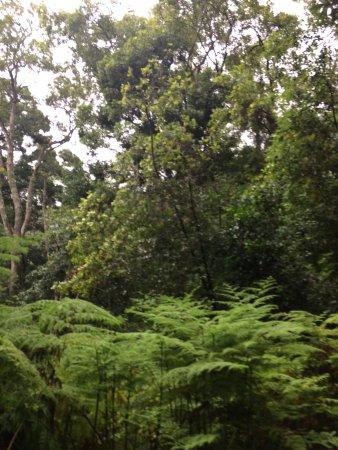 Grootvadersbosch Nature Reserve: photo5.jpg
