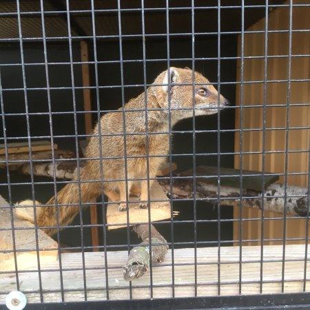 Rockenhausen, Alemanha: Tierpark Donnersberg