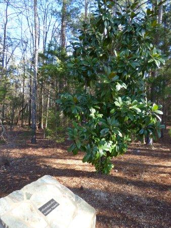 Andrew Jackson State Park: tree