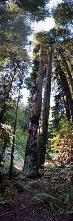 Muir Woods National Monument Mill Valley All You Need