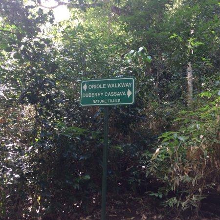 Montserrat: Duberry-Cassava Trail